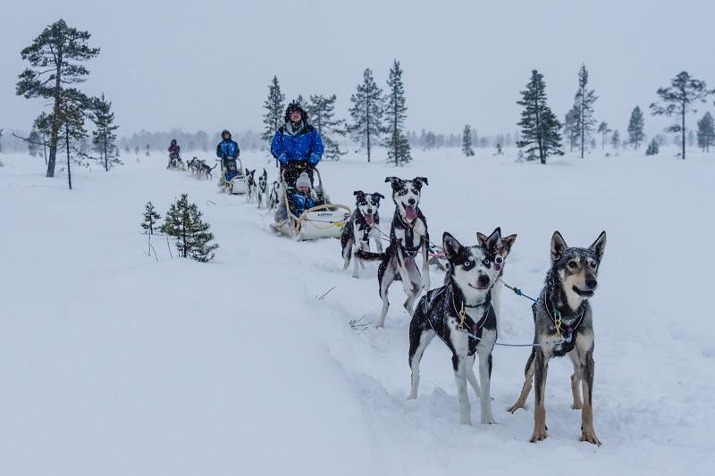 Husky Experience - Visit Inari, Finland, Lapland
